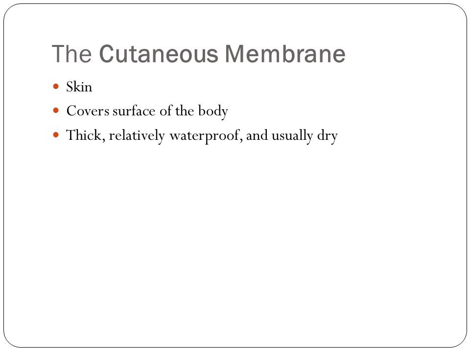 The Cutaneous Membrane