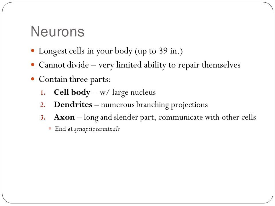 Neurons Longest cells in your body (up to 39 in.)