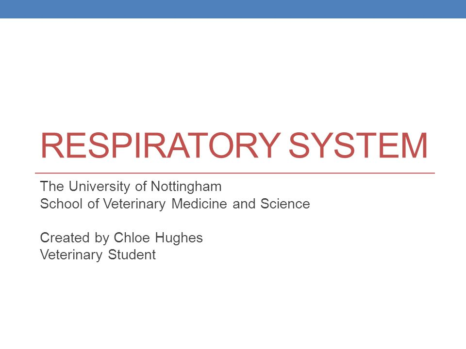 Respiratory System The University of Nottingham