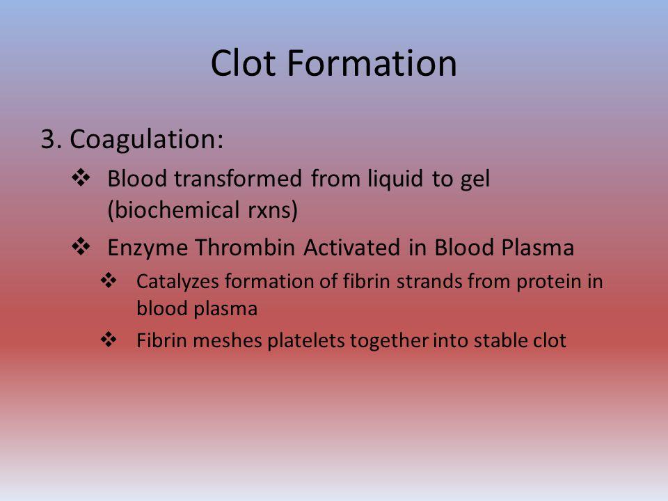Clot Formation 3. Coagulation: