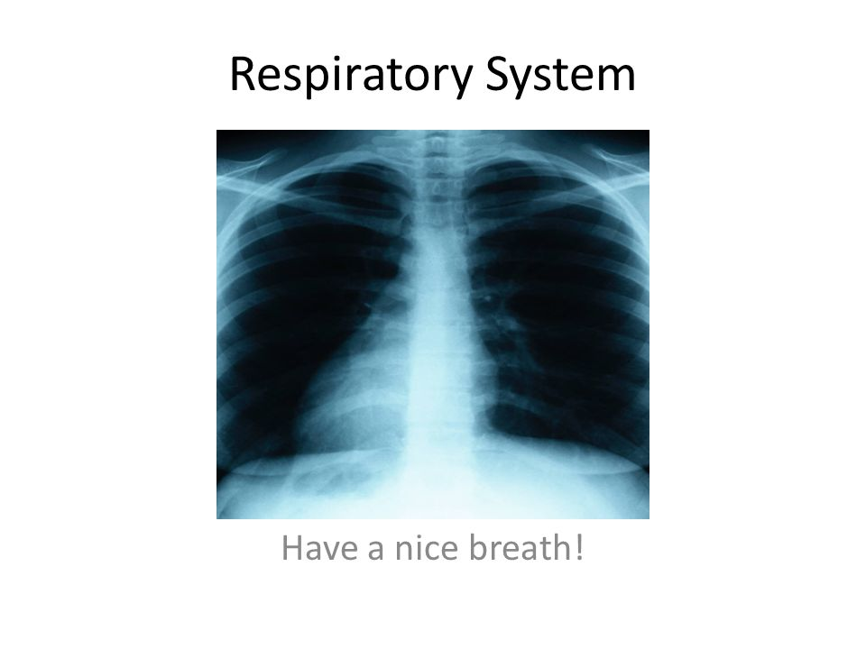 Respiratory System Have a nice breath!