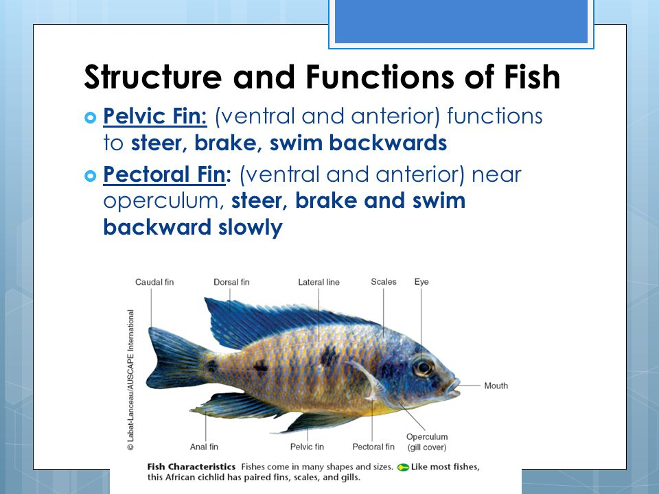 Structure and Functions of Fish