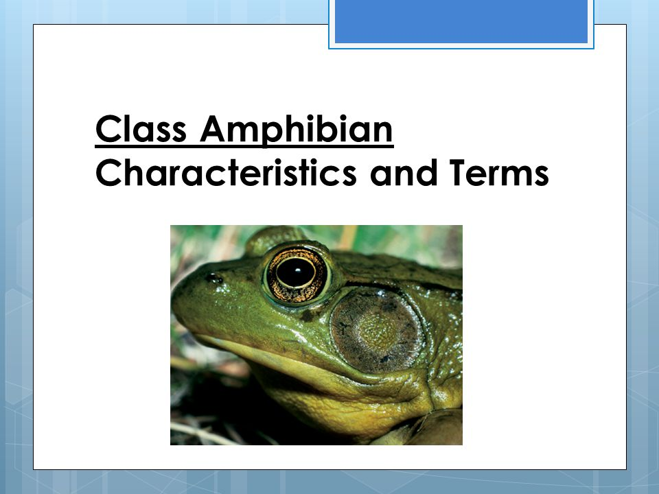 Class Amphibian Characteristics and Terms