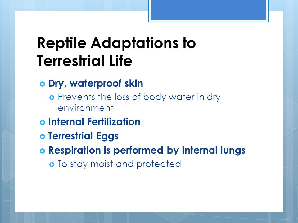Reptile Adaptations to Terrestrial Life