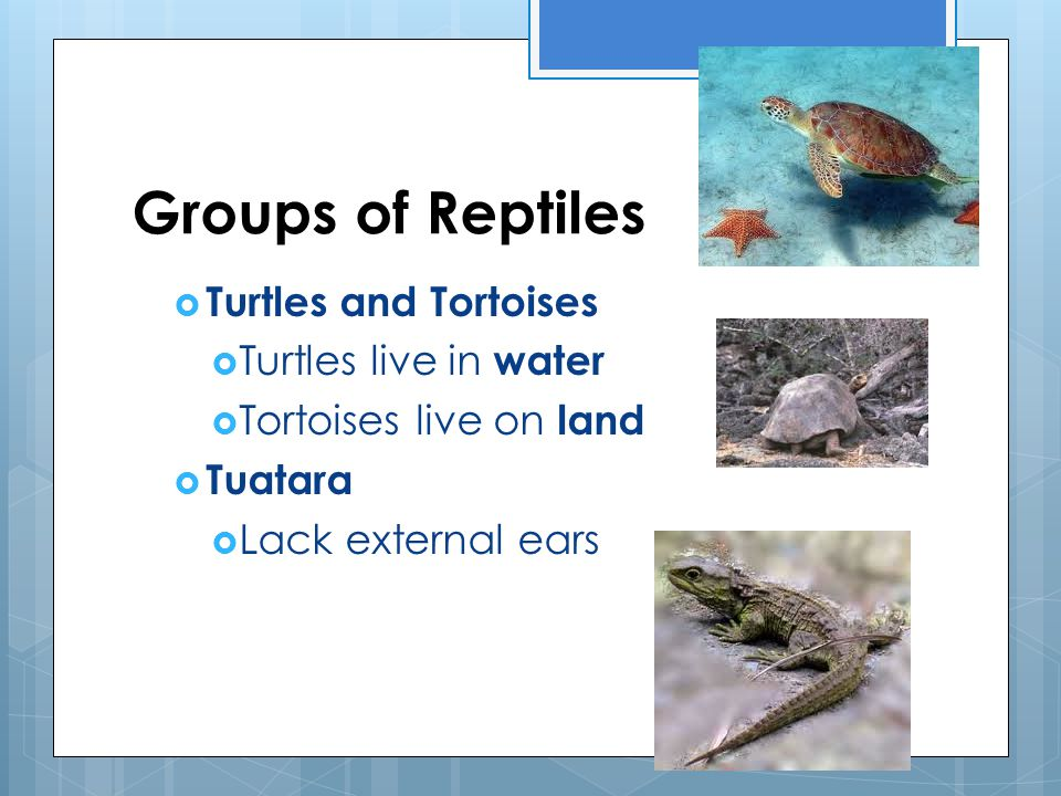 Groups of Reptiles Turtles and Tortoises Turtles live in water