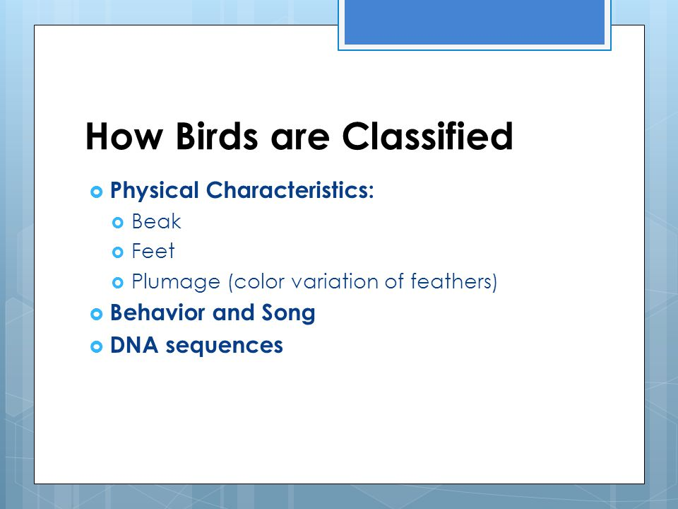 How Birds are Classified