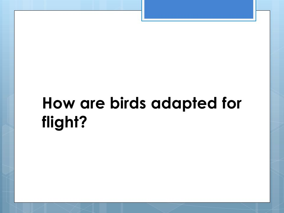 How are birds adapted for flight