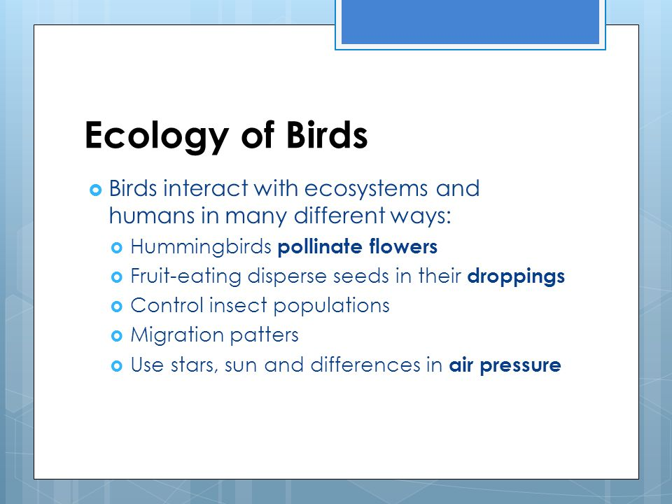 Ecology of Birds Birds interact with ecosystems and humans in many different ways: Hummingbirds pollinate flowers.
