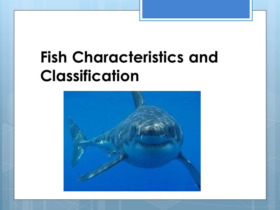 Fish Characteristics and Classification