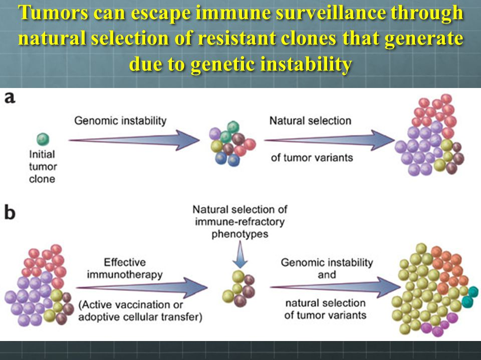 Tumors can escape immune surveillance through natural selection of resistant clones that generate due to genetic instability