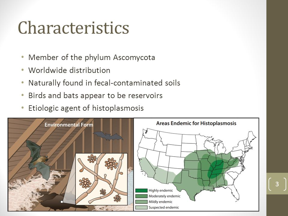 Characteristics Member of the phylum Ascomycota Worldwide distribution