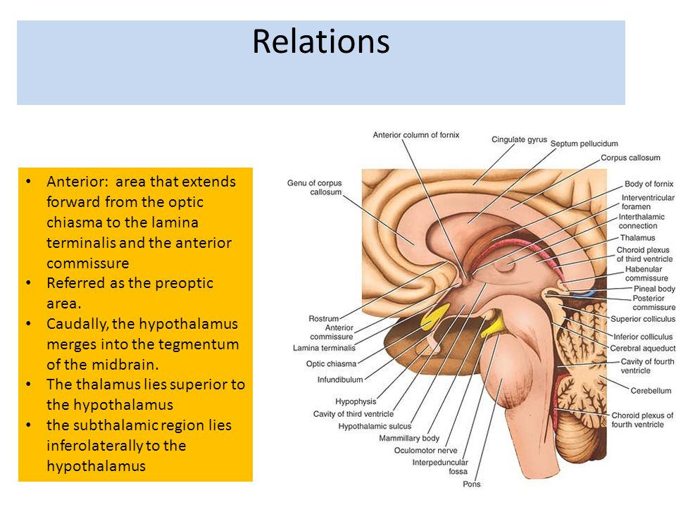 Relations Anterior: area that extends forward from the optic chiasma to the lamina terminalis and the anterior commissure.