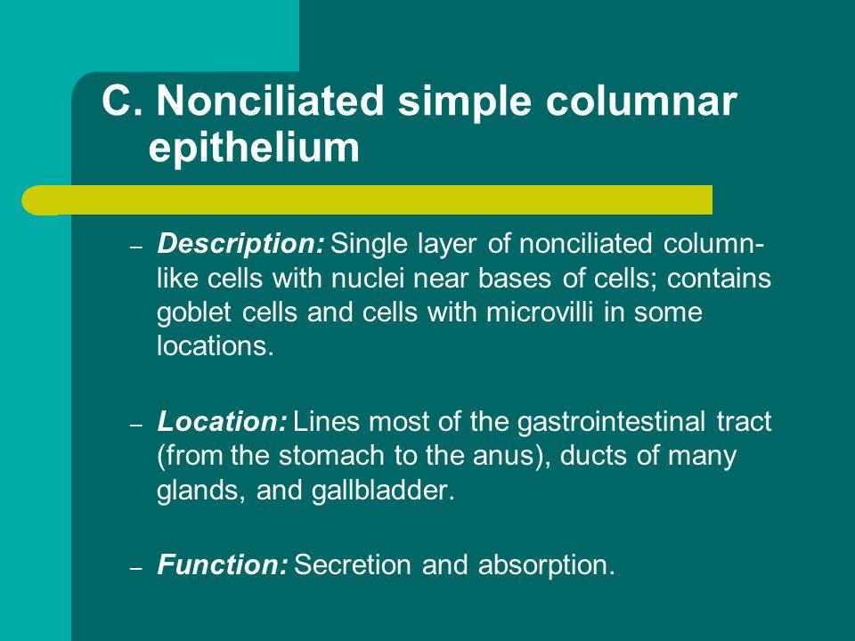C. Nonciliated simple columnar epithelium