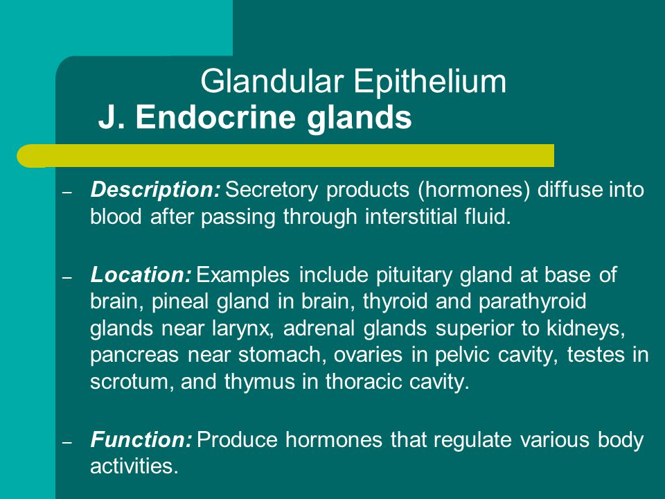 Glandular Epithelium J. Endocrine glands
