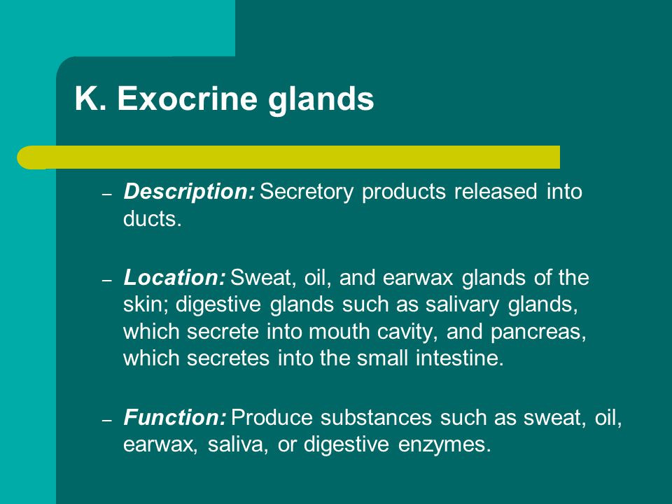 K. Exocrine glands Description: Secretory products released into ducts.