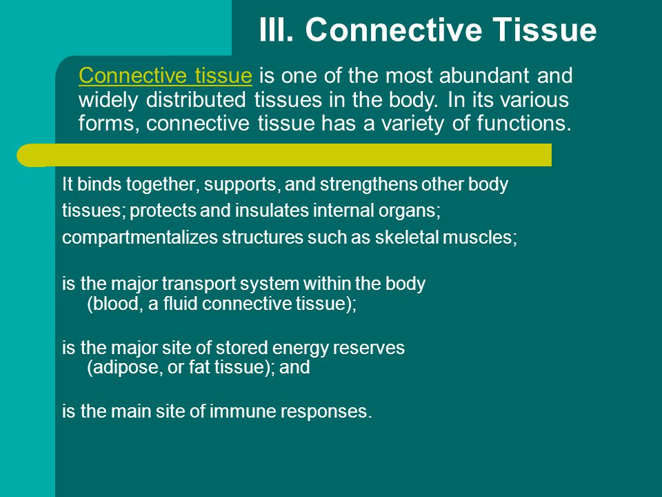 III. Connective Tissue