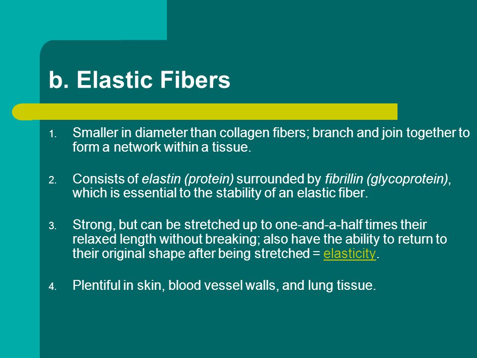 b. Elastic Fibers Smaller in diameter than collagen fibers; branch and join together to form a network within a tissue.