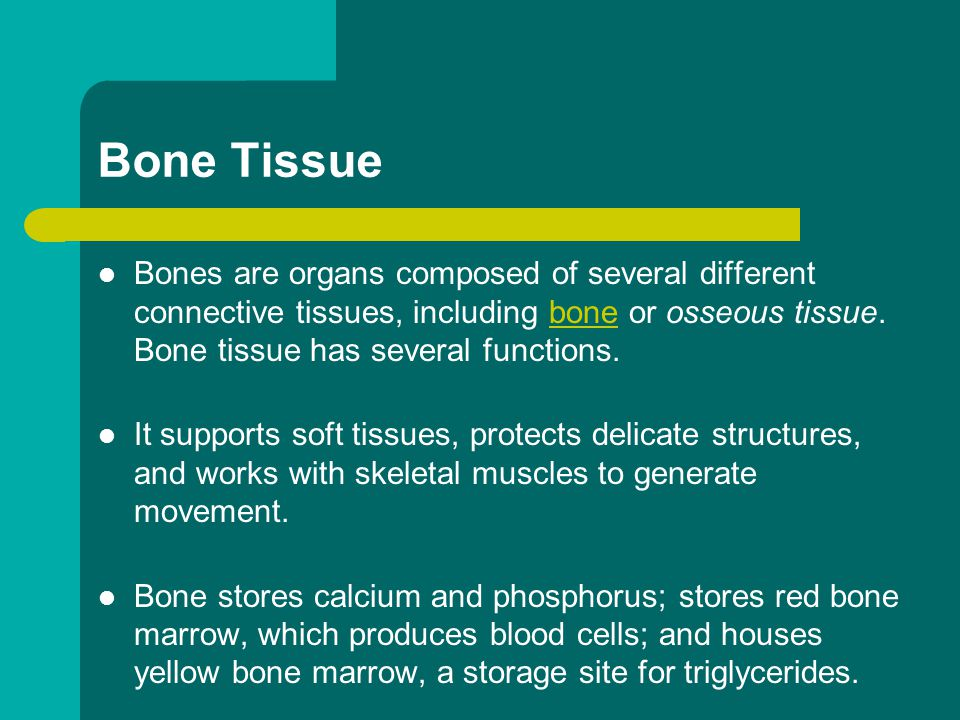 Bone Tissue Bones are organs composed of several different connective tissues, including bone or osseous tissue. Bone tissue has several functions.