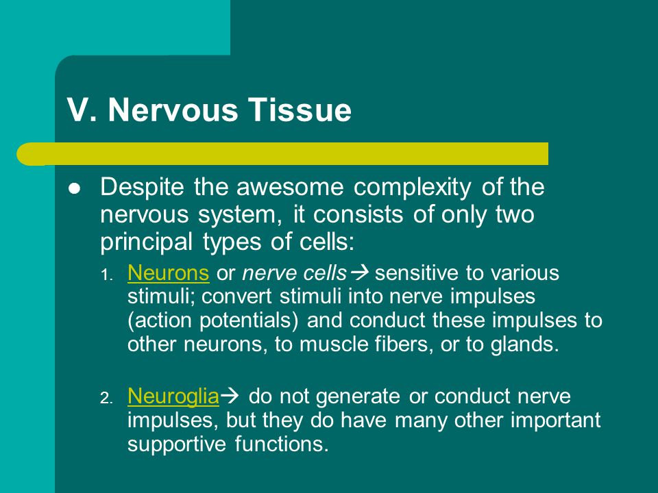V. Nervous Tissue Despite the awesome complexity of the nervous system, it consists of only two principal types of cells:
