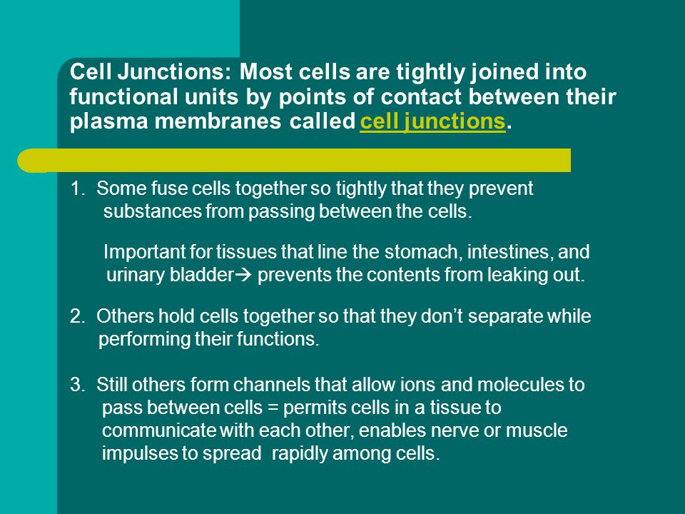Cell Junctions: Most cells are tightly joined into functional units by points of contact between their plasma membranes called cell junctions.