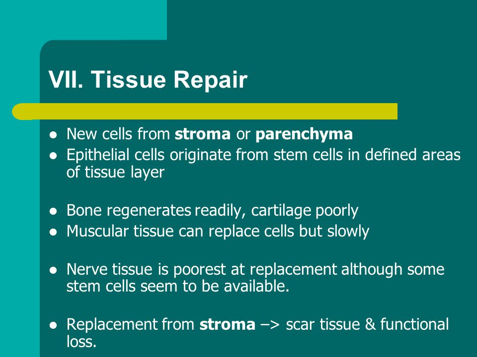 VII. Tissue Repair New cells from stroma or parenchyma