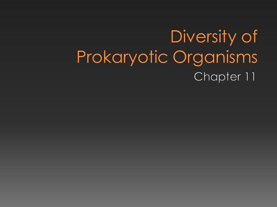 Diversity of Prokaryotic Organisms