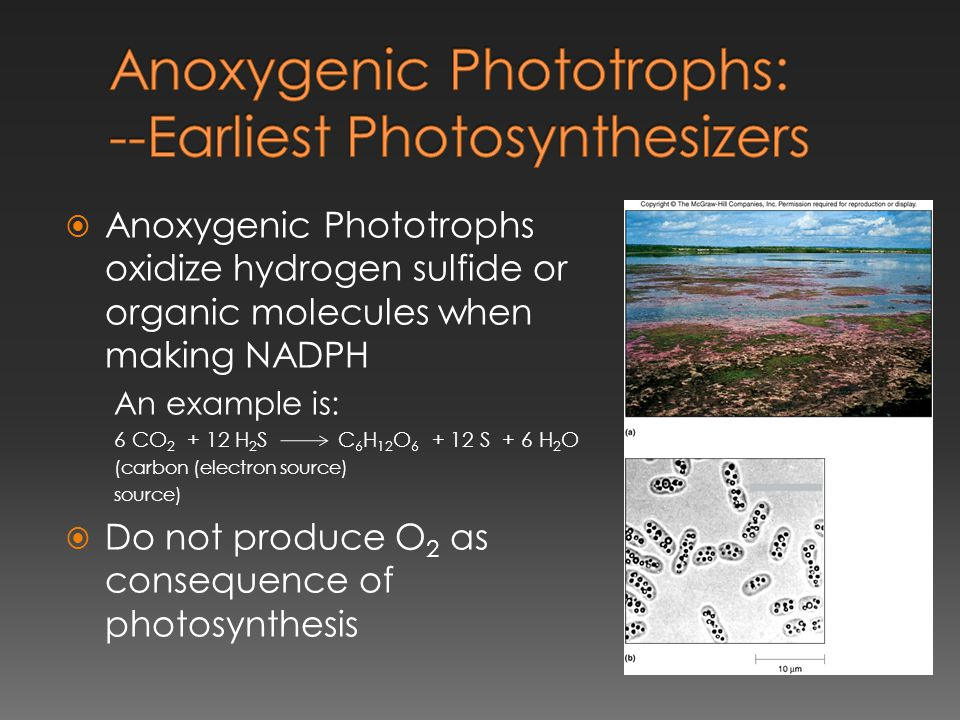 Anoxygenic Phototrophs: --Earliest Photosynthesizers