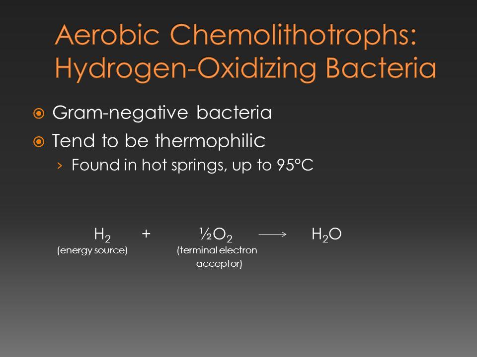 Aerobic Chemolithotrophs: Hydrogen-Oxidizing Bacteria