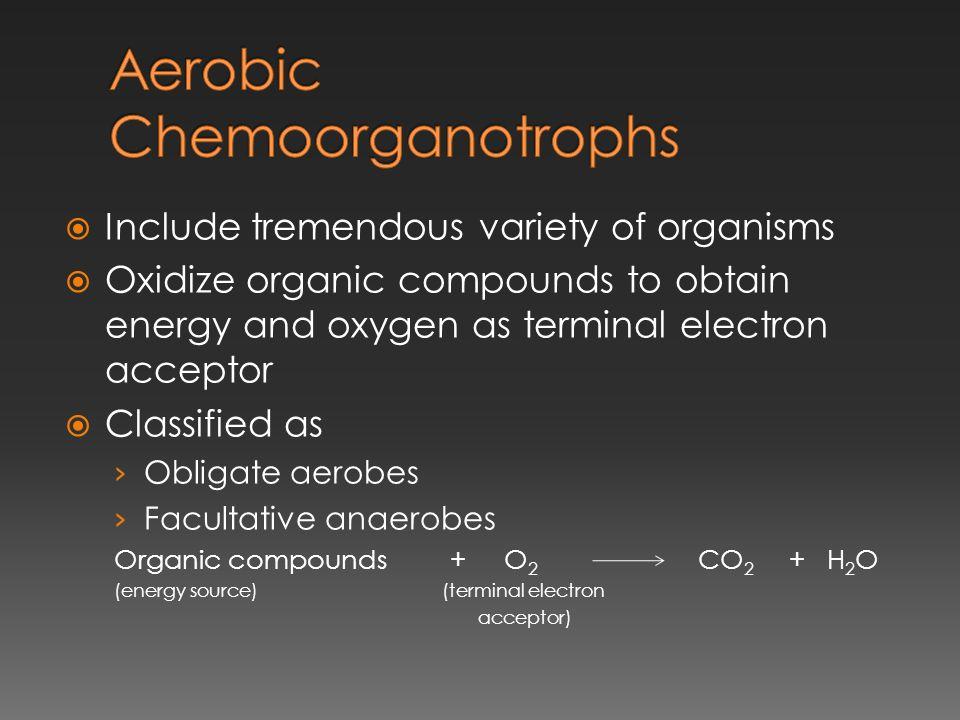 Aerobic Chemoorganotrophs