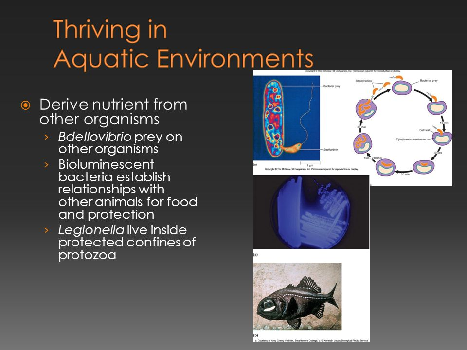 Thriving in Aquatic Environments