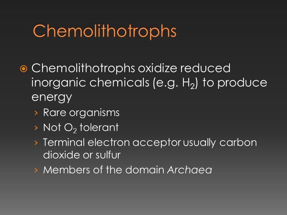 Chemolithotrophs Chemolithotrophs oxidize reduced inorganic chemicals (e.g. H2) to produce energy. Rare organisms.