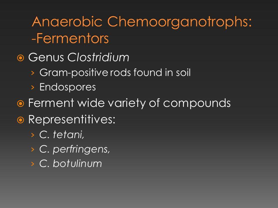 Anaerobic Chemoorganotrophs: -Fermentors