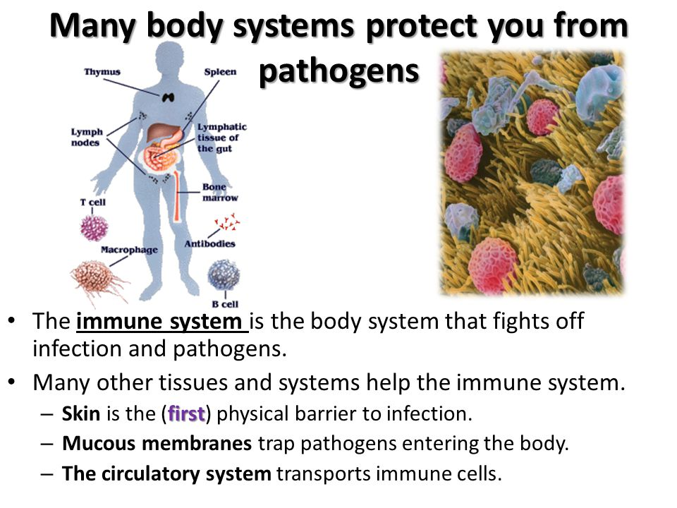Many body systems protect you from pathogens