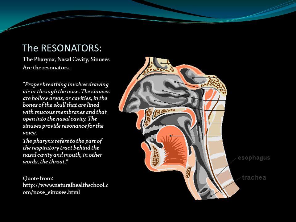 The RESONATORS: The Pharynx, Nasal Cavity, Sinuses Are the resonators.