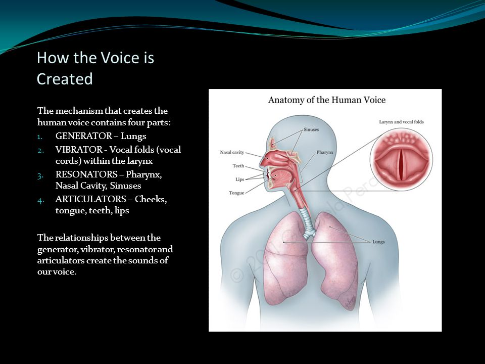 How the Voice is Created