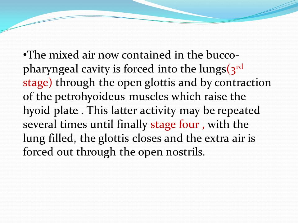 The mixed air now contained in the bucco-pharyngeal cavity is forced into the lungs(3rd stage) through the open glottis and by contraction of the petrohyoideus muscles which raise the hyoid plate .