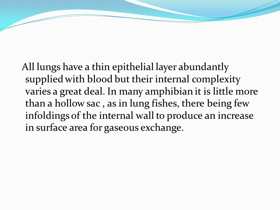 All lungs have a thin epithelial layer abundantly supplied with blood but their internal complexity varies a great deal.