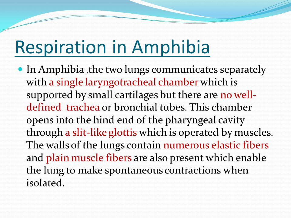 Respiration in Amphibia