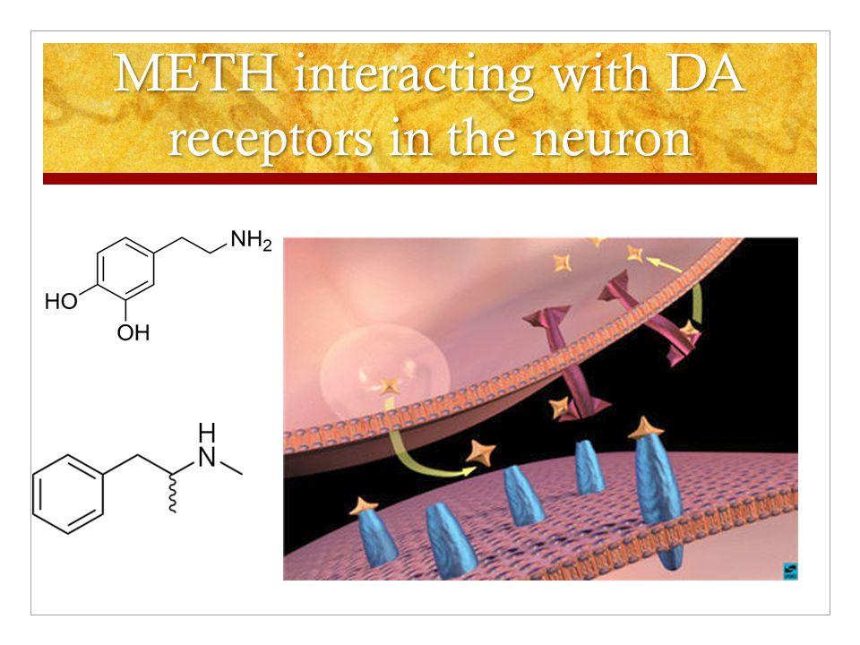 METH interacting with DA receptors in the neuron