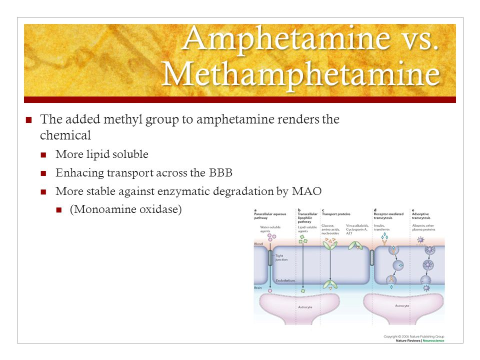 Amphetamine vs. Methamphetamine