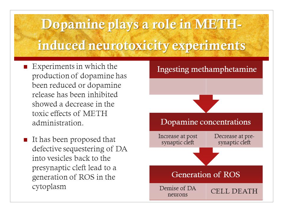 Dopamine plays a role in METH-induced neurotoxicity experiments