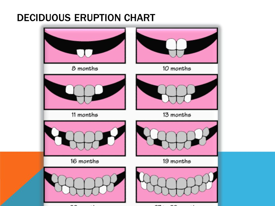 Deciduous Eruption Chart