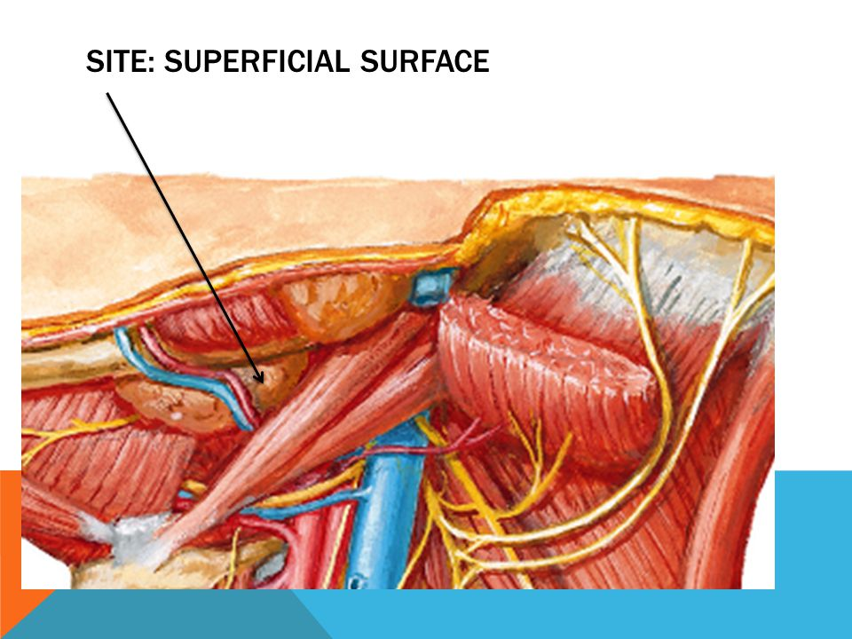 Site: superficial surface