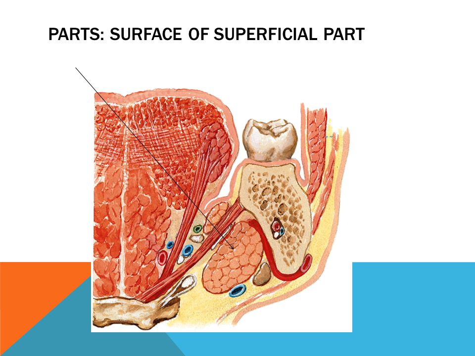 Parts: surface of superficial part