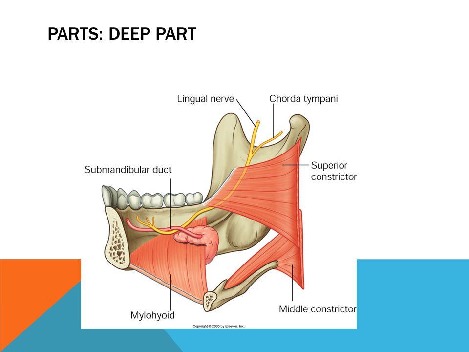 Parts: deep part