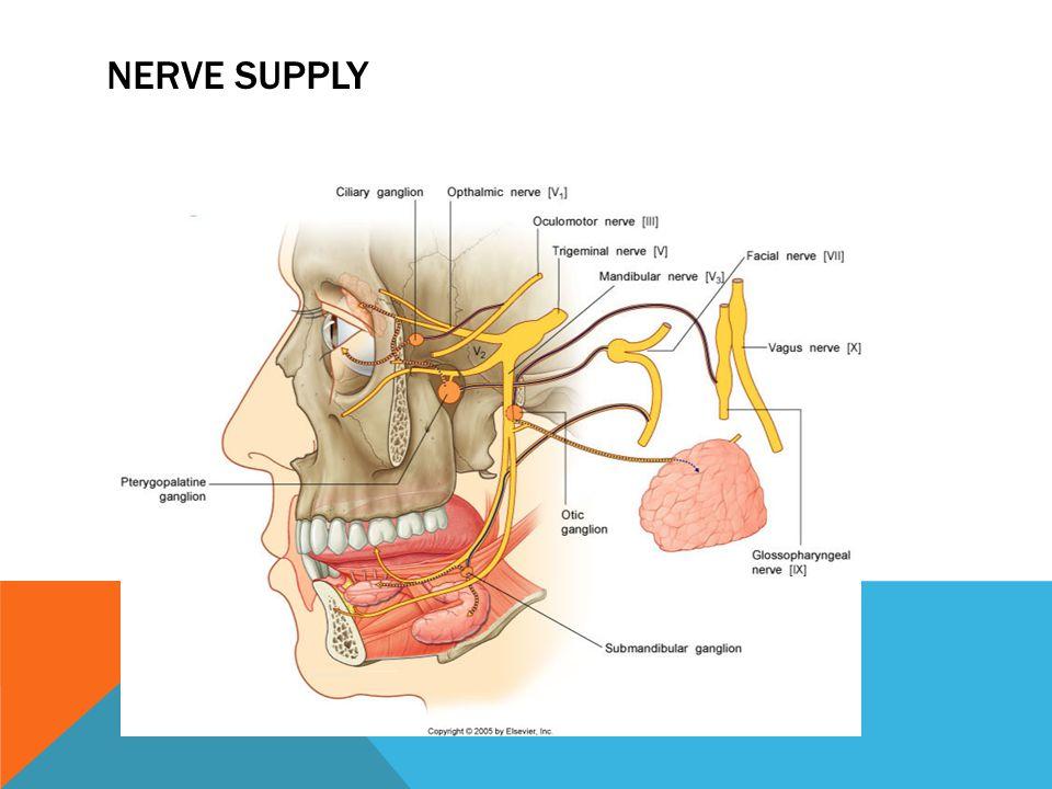 Nerve supply