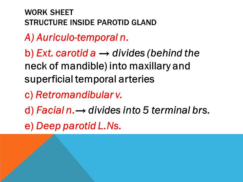 Work sheet Structure inside parotid gland