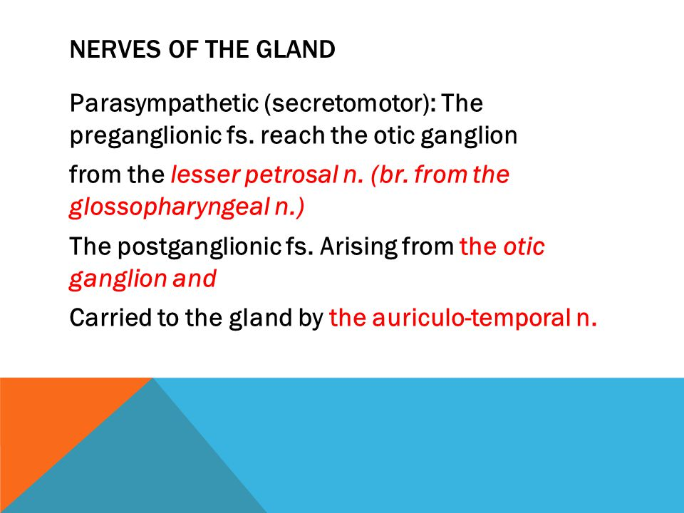 Nerves of the gland