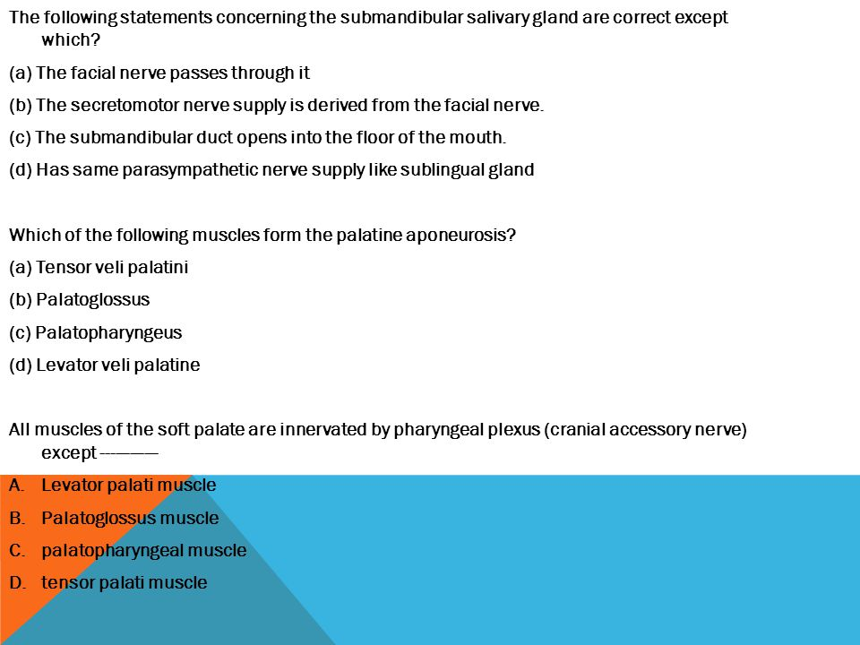 The following statements concerning the submandibular salivary gland are correct except which
