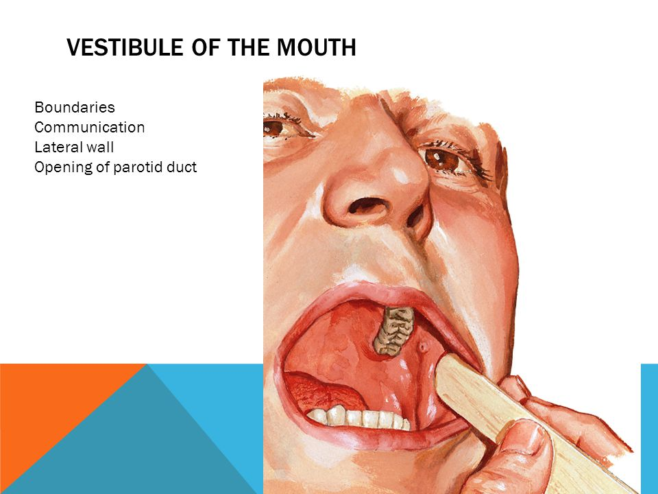 Vestibule of the mouth Boundaries Communication Lateral wall